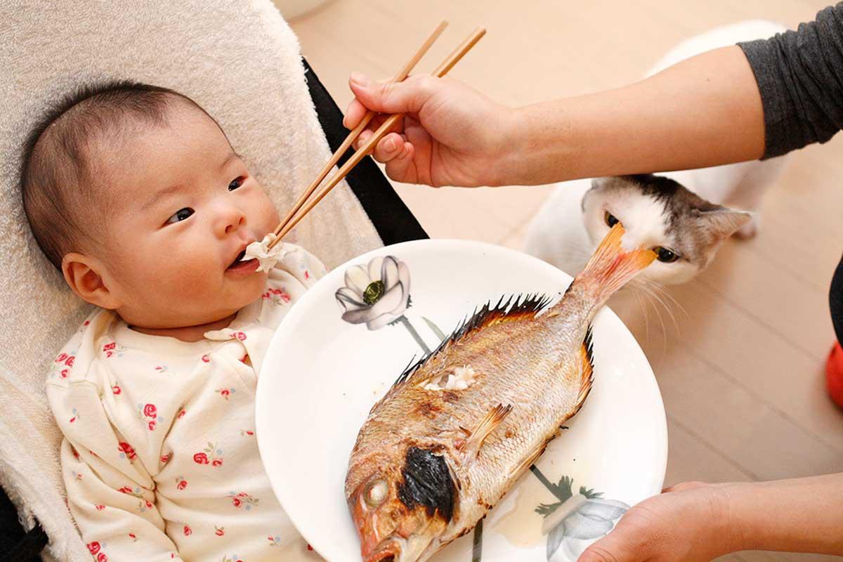 Bật mí những loại cá chứa nhiều thủy ngân hạn chế cho bé ăn